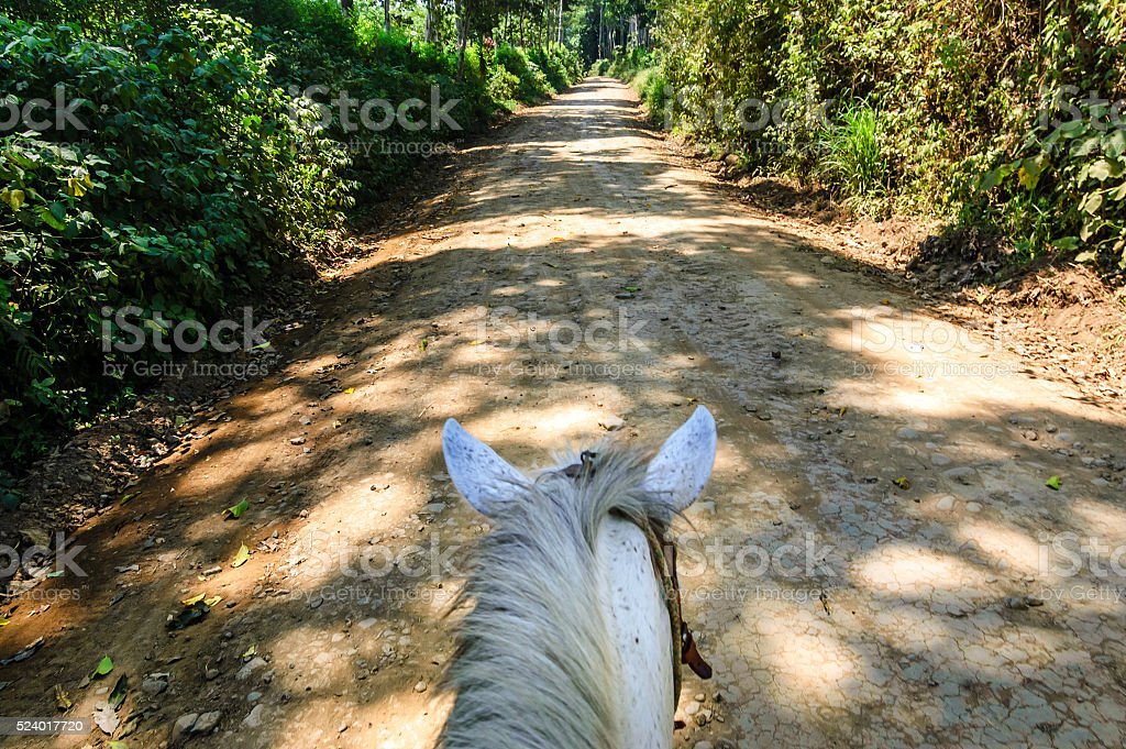 View of horse from horseback stock photo