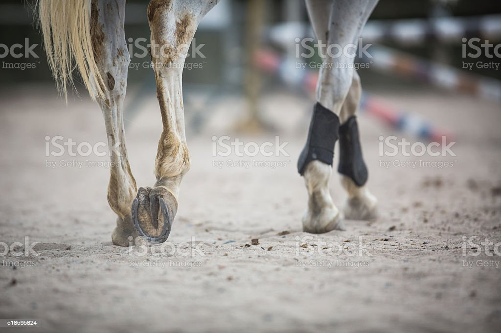 View of horse hoofs with horseshoes stock photo