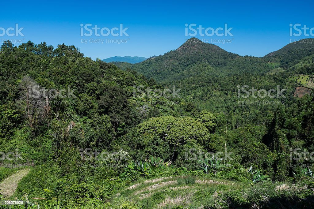 View of Jungle and rice paddy stock photo