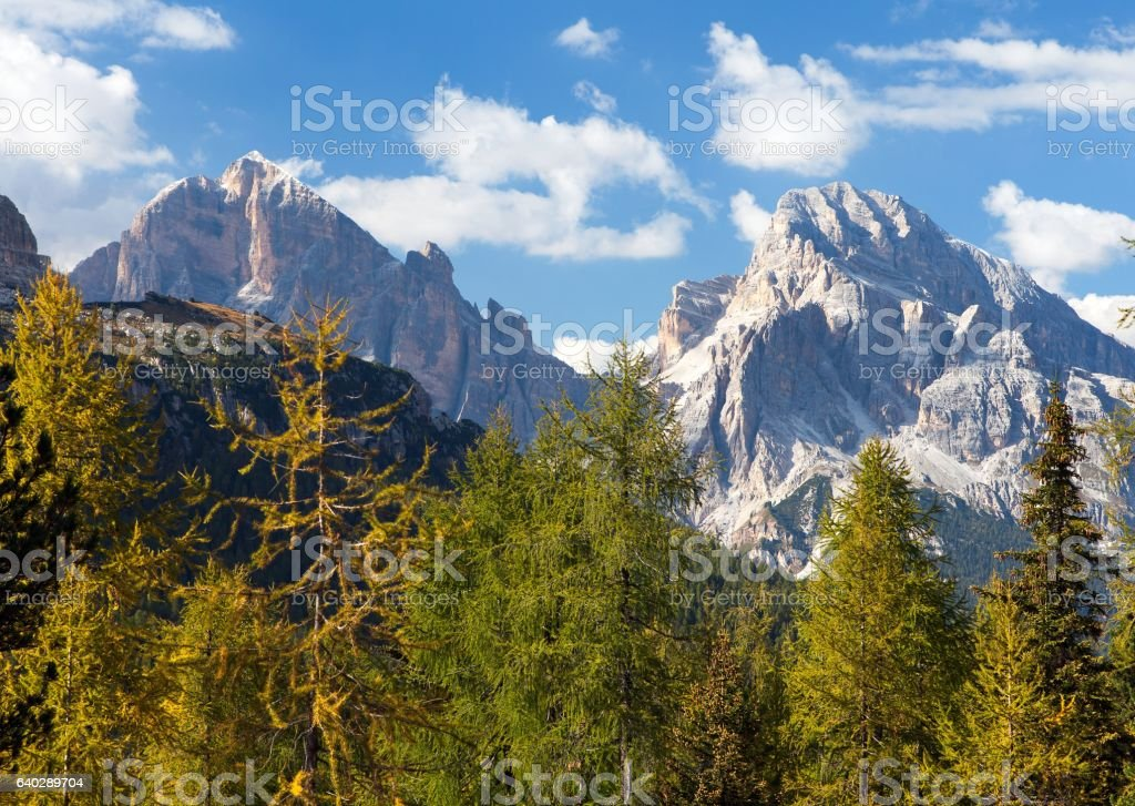 View of larch wood and Le Tofane Gruppe, Dolomiti, Italy stock photo