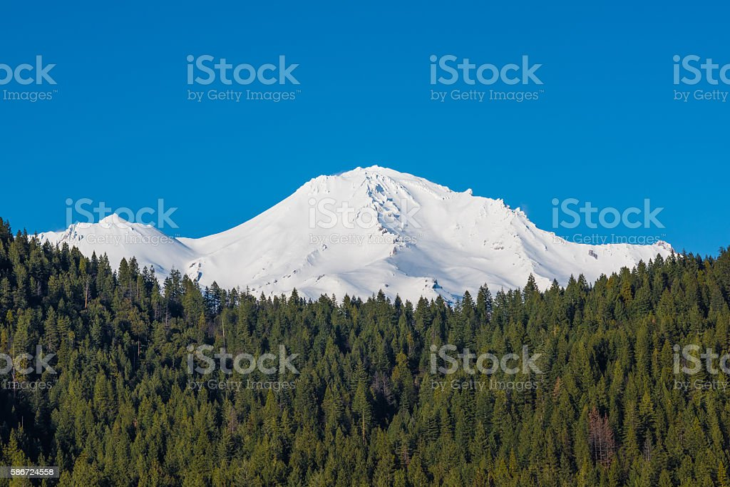 View of Mount Shasta peaks with alpine forest stock photo