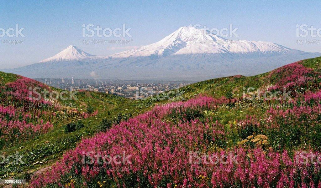 View of Mountain Ararat stock photo