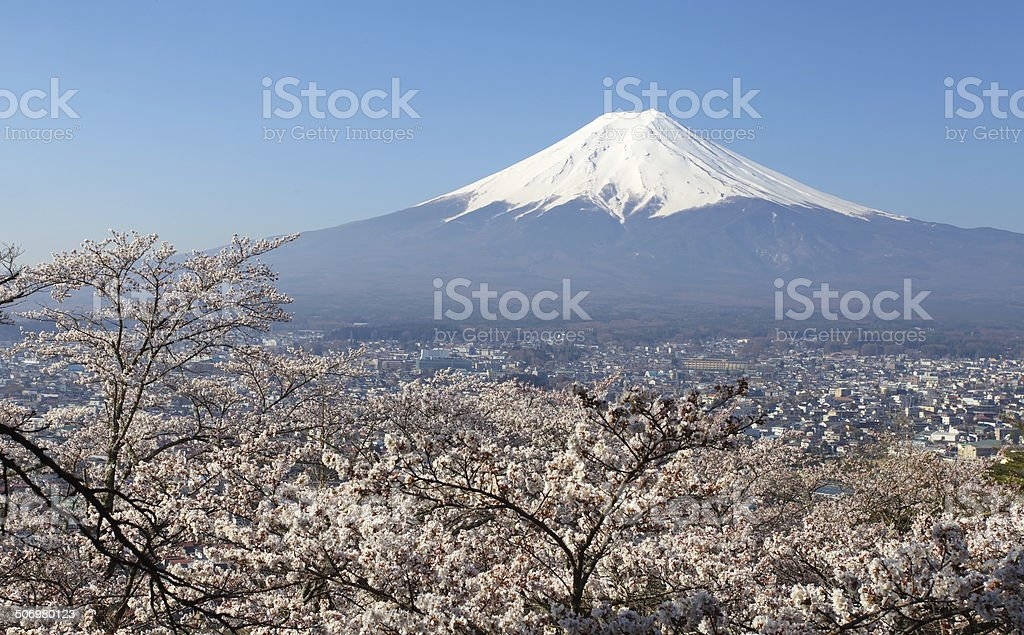 View of Mountain Fuji and sakura cherry blossom stock photo