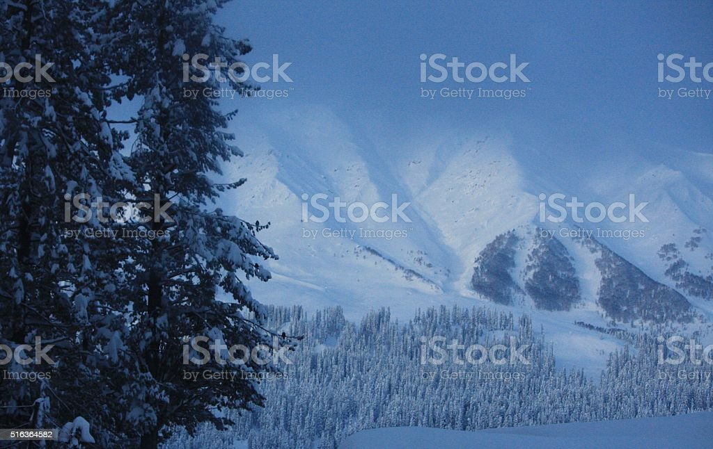 View of mountains and trees in Gulmarg stock photo
