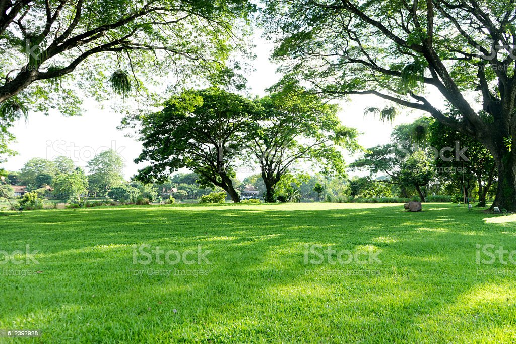 view of natural  tree and grass field stock photo