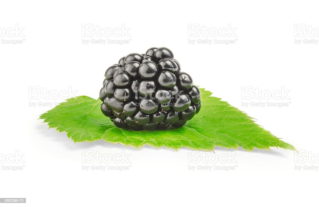view of nice fresh blackberry on green leaf in white stock photo