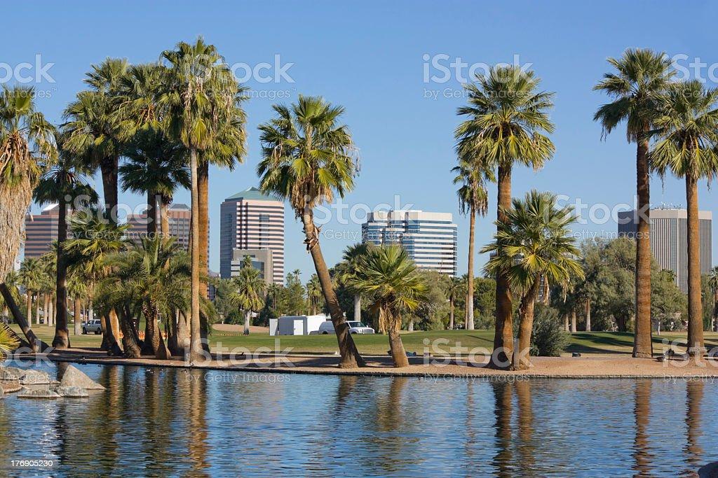 View of palm trees downtown Phoenix, AZ  royalty-free stock photo