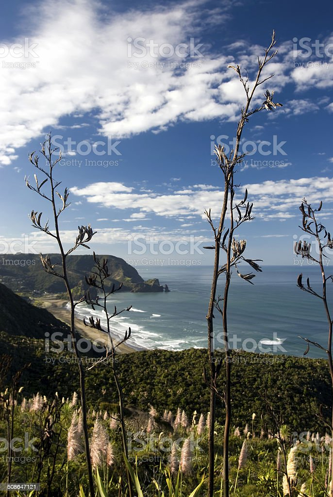 View of Piha beach, flax bushes, North Island, New Zealand stock photo