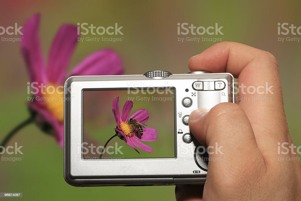 View of pink flower photo on a camera royalty-free stock photo