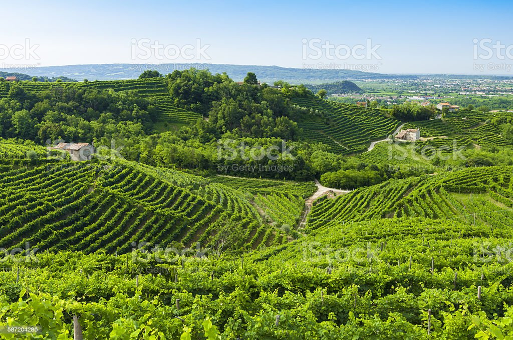 View of Prosecco vineyards from Valdobbiadene, Italy during summ stock photo