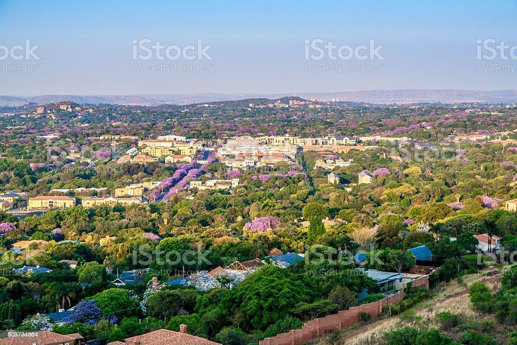 View of purple Jacaranda lined streets in Pretoria suburb stock photo