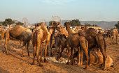 View of Pushkar Camel Fair, Rajasthan, India.