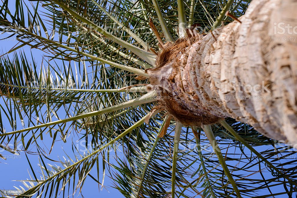 View of radiating palm fronds stock photo