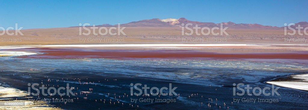 view of Red lagoon (laguna roja) with flamingos, in Uyuni stock photo