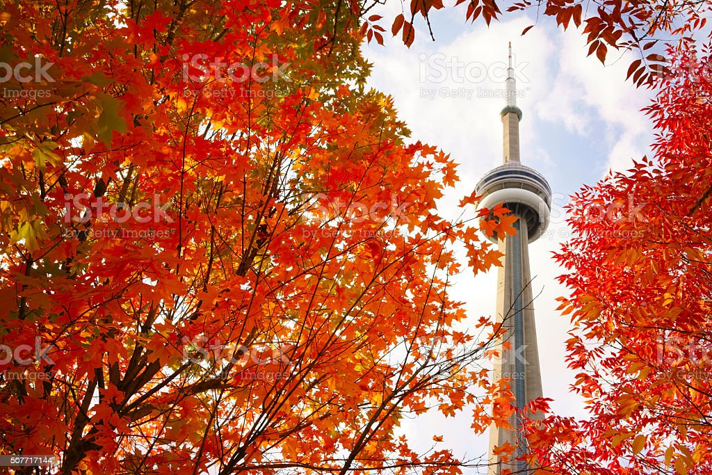 View of red maple tree and CN Tower stock photo