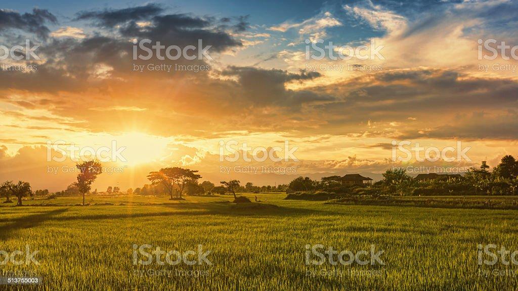 Blick auf ein Reisfeld Lizenzfreies stock-foto