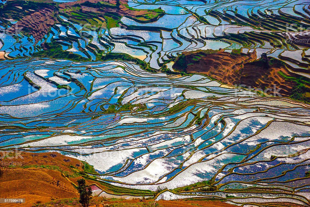 View of Rice Fields in Flood Season Sunny Day stock photo