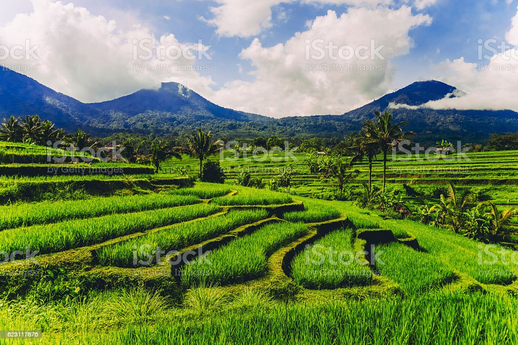 View of Rice Terrace During the Morning Fog stock photo