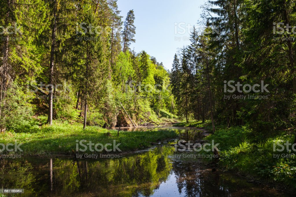 View of river Gauja green bank with reflection in the water. Gauja National park, Latvia. stock photo