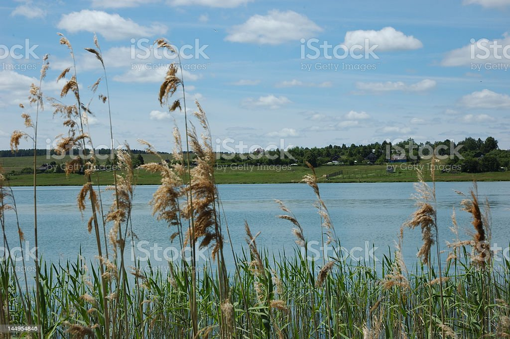 View of river through reed royalty-free stock photo