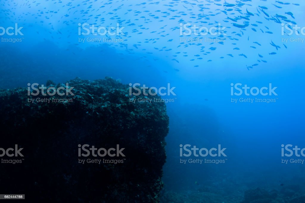 View of rock surrounded by a school of fish in a deep blue pacific ocean stock photo