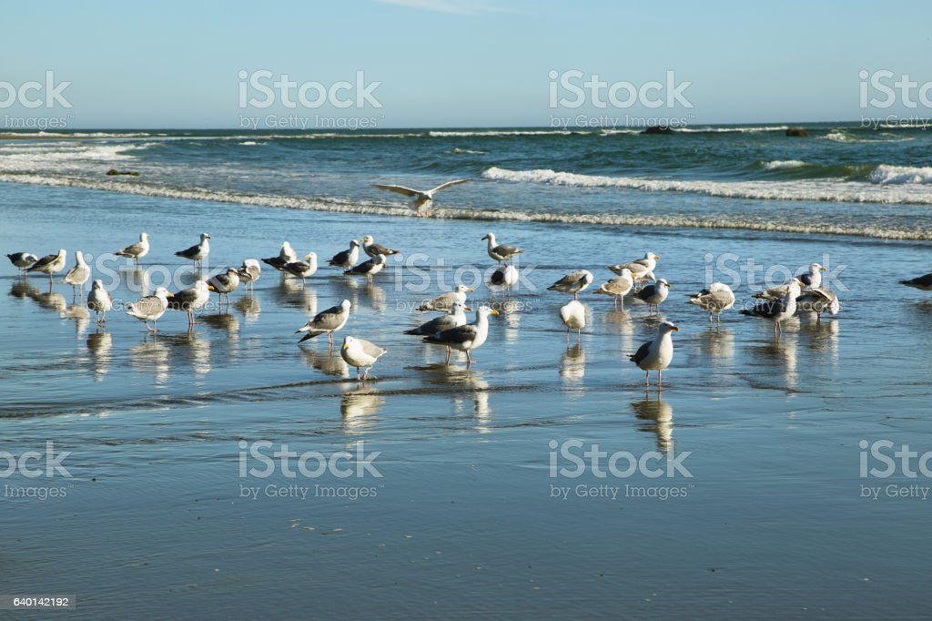 View of seagulls in Second beach stock photo