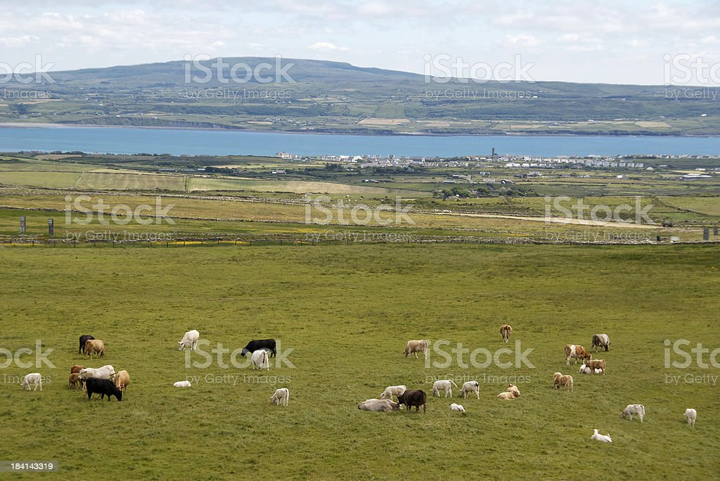 View of Shannon River, Ireland, from pasture stock photo
