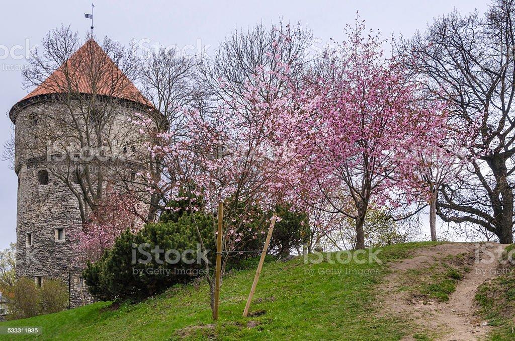 View of Tallinn spring day stock photo