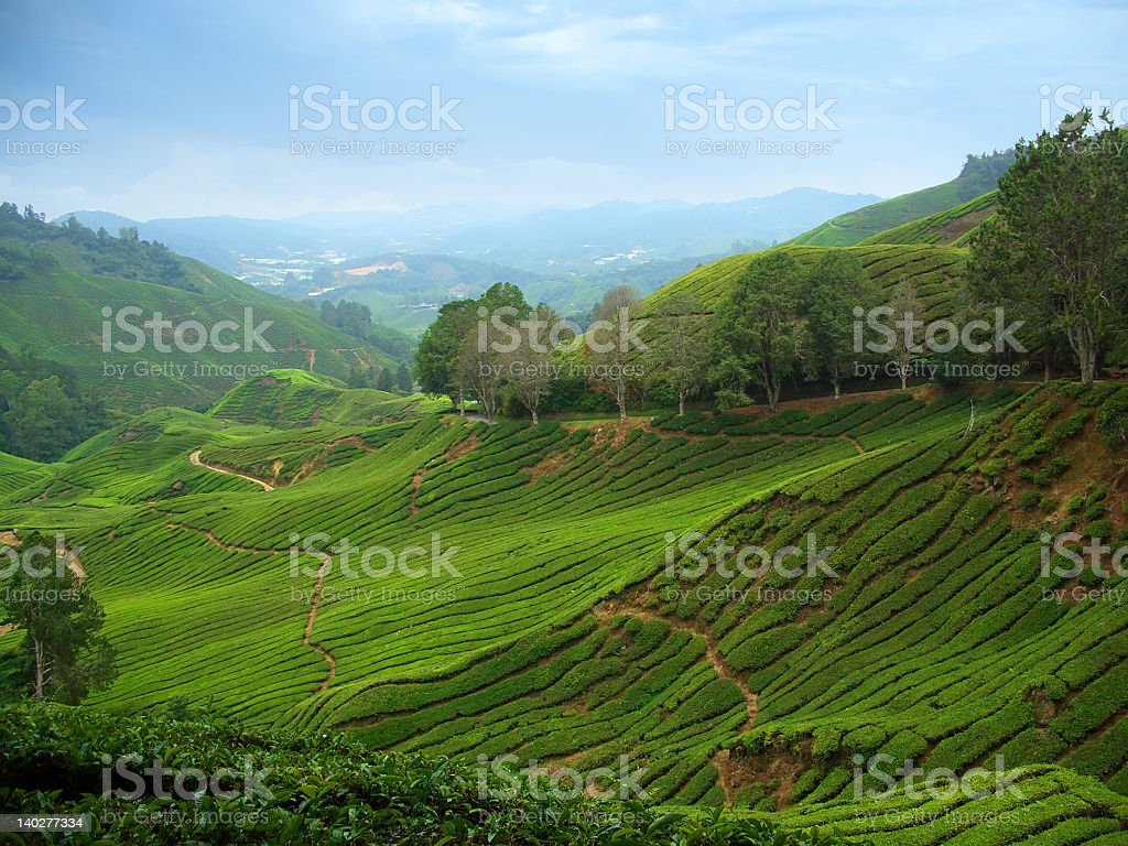 View of tea plantations in Cameron Highlands, Malaysia royalty-free stock photo