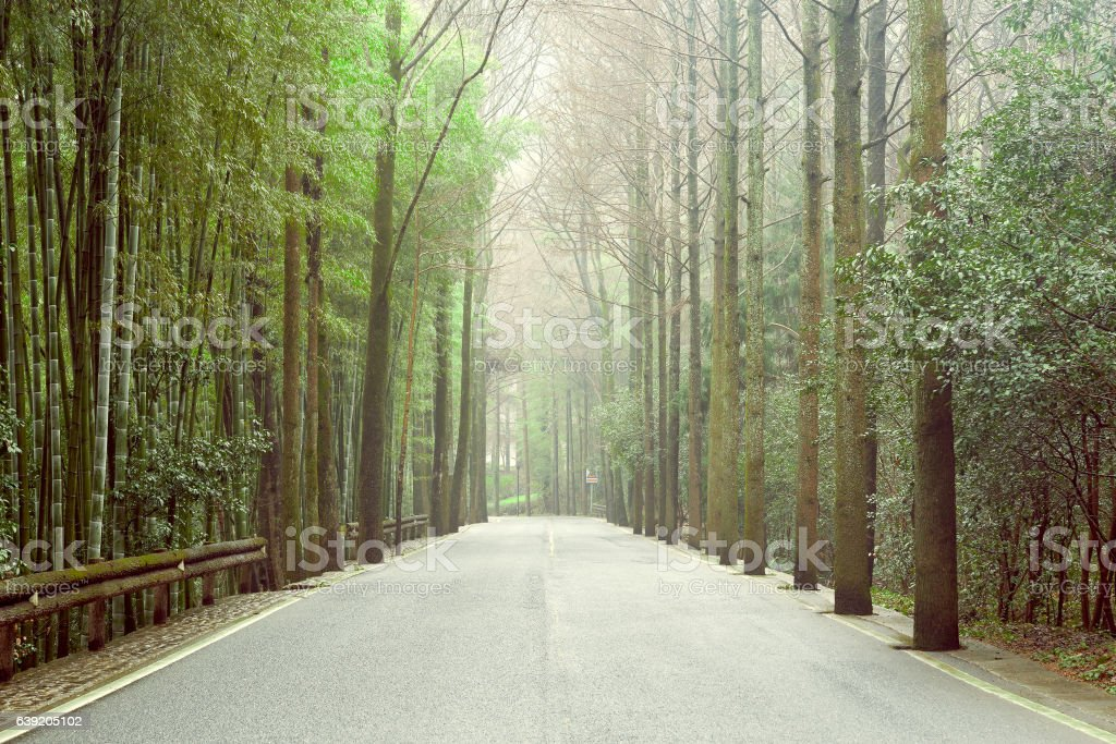 View of the asphalt road in the bamboo frorest. stock photo
