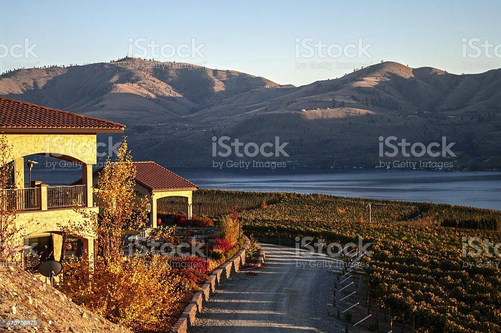 view of the Benson vineyard stock photo