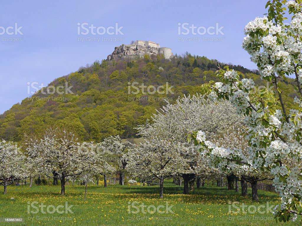 View of the Castle Hoher Neuffen in spring stock photo