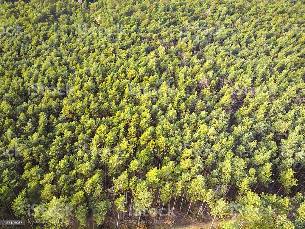 View of the Forest from a Bird's Eye royalty-free stock photo