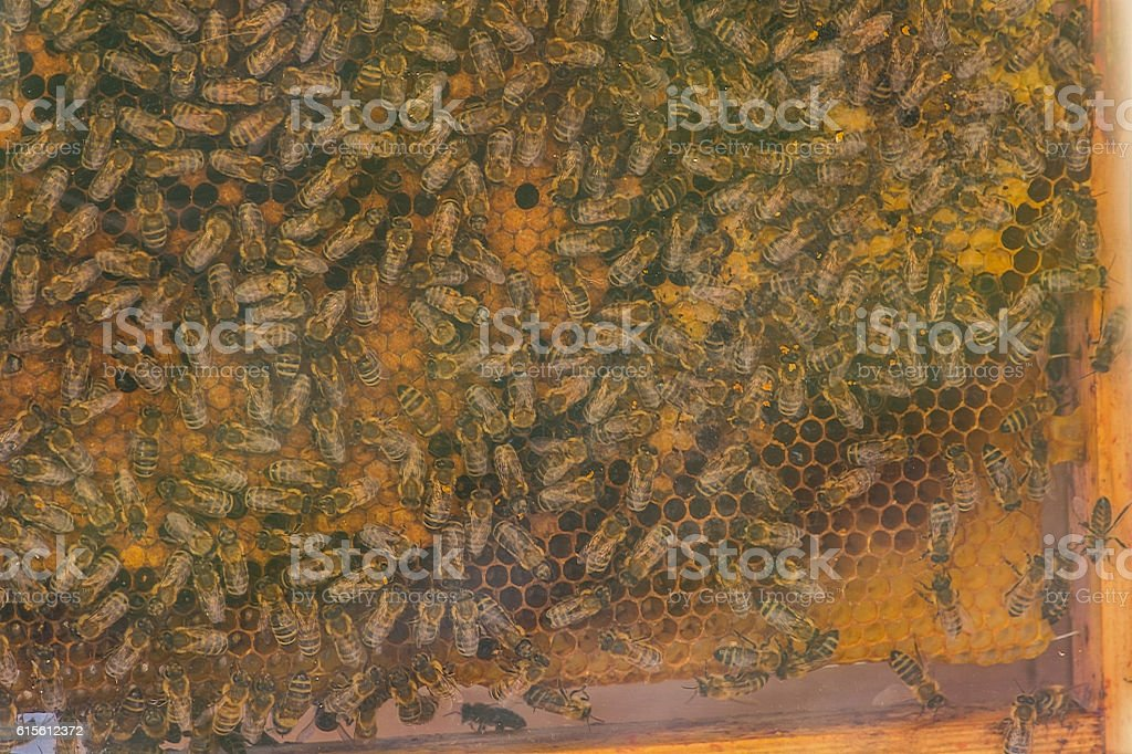 View of the honeycomb of a beehive stock photo
