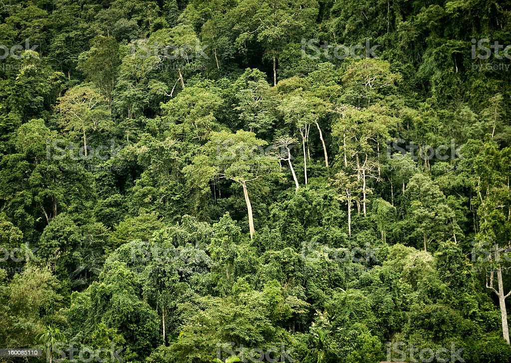 View of the jungle stock photo