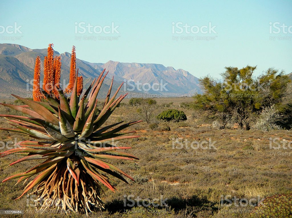 View of the Karoo in South Africa stock photo