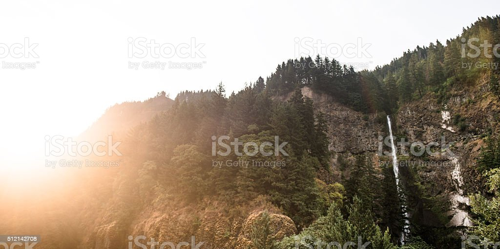 view of the Oregon forest stock photo