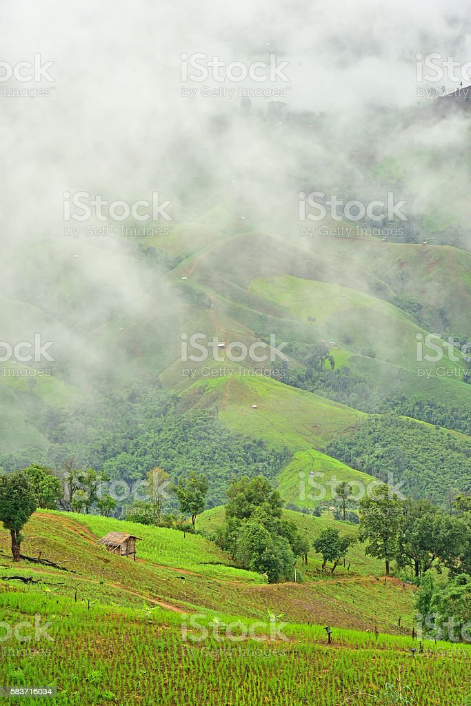 View of the rice field on the mountain stock photo