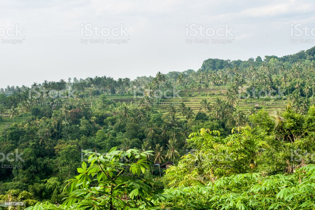View of the rice terraces Boracay Philippines stock photo