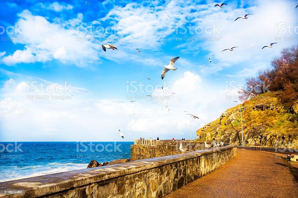 View of the sea coast flying birds in San Sebastian. stock photo