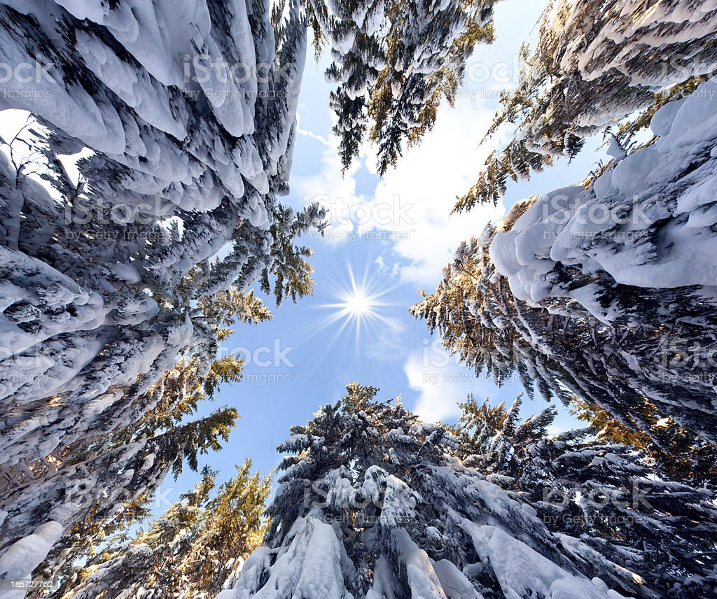 view of the sky in a snowy forest royalty-free stock photo