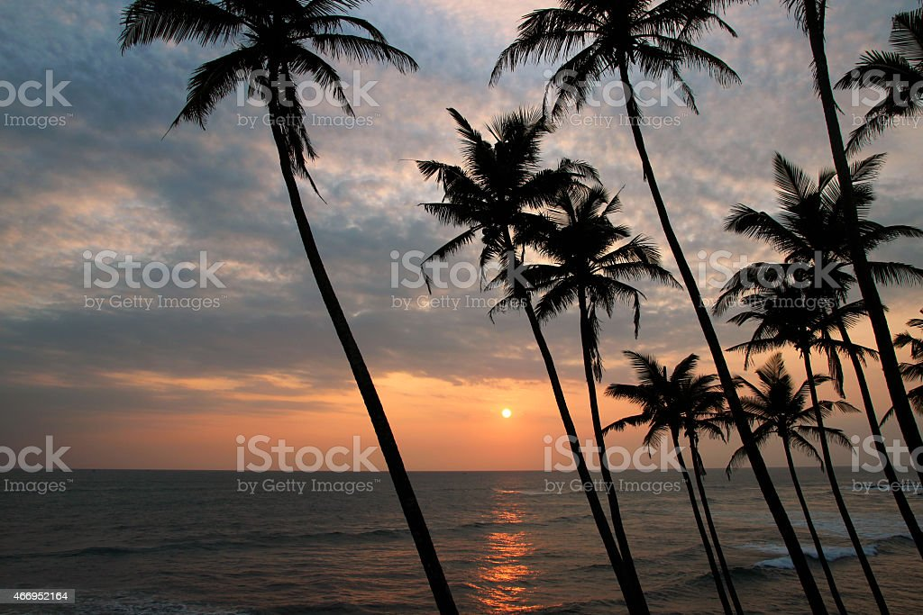 view of the sunset by the sea through the silhouettes of palm trees royalty-free stock photo