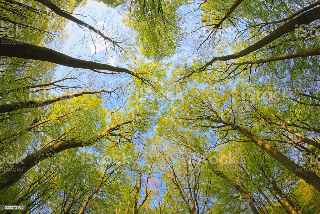 View of the treetops. stock photo