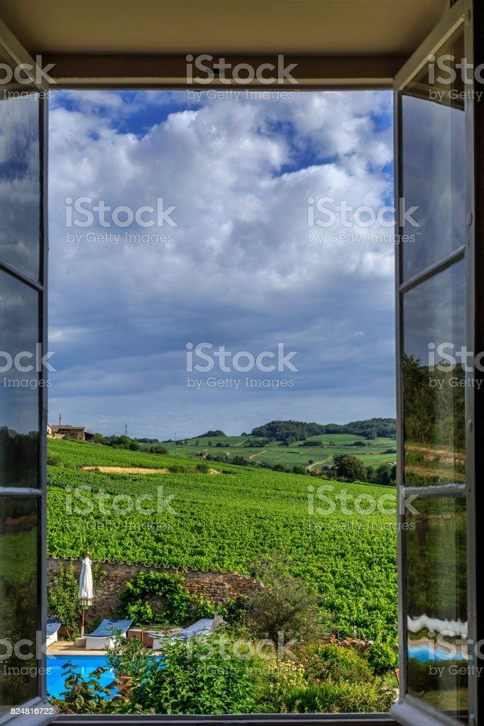 view of the vineyard stock photo