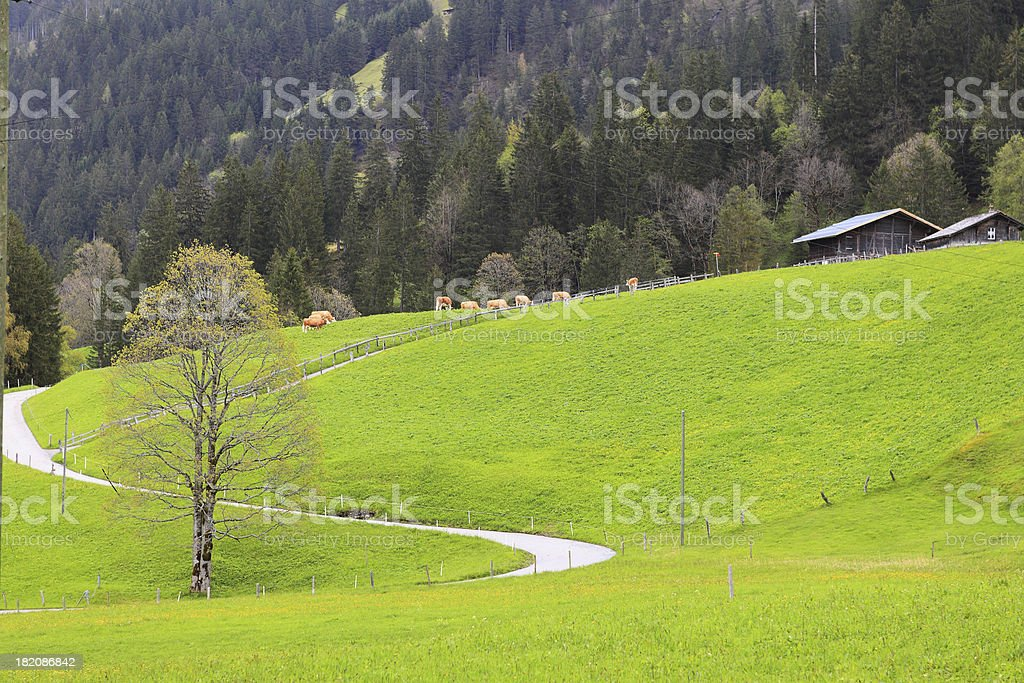 View of town. side way to jungfraujoch royalty-free stock photo