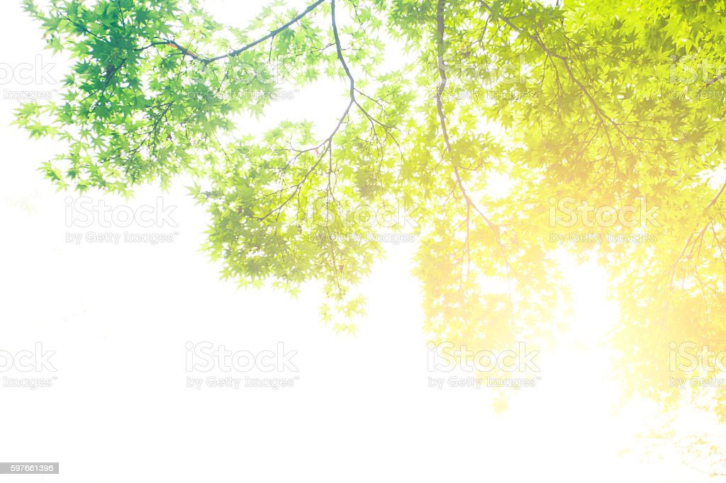 View of tree branches and sunlight stock photo