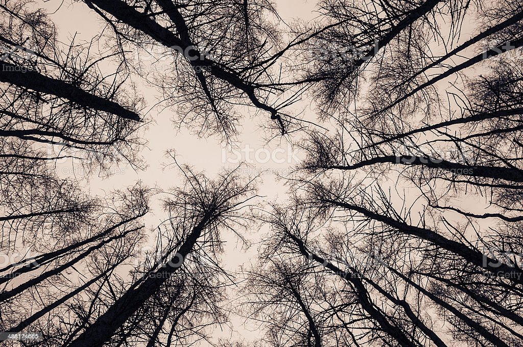 View of trees from the bottom stock photo