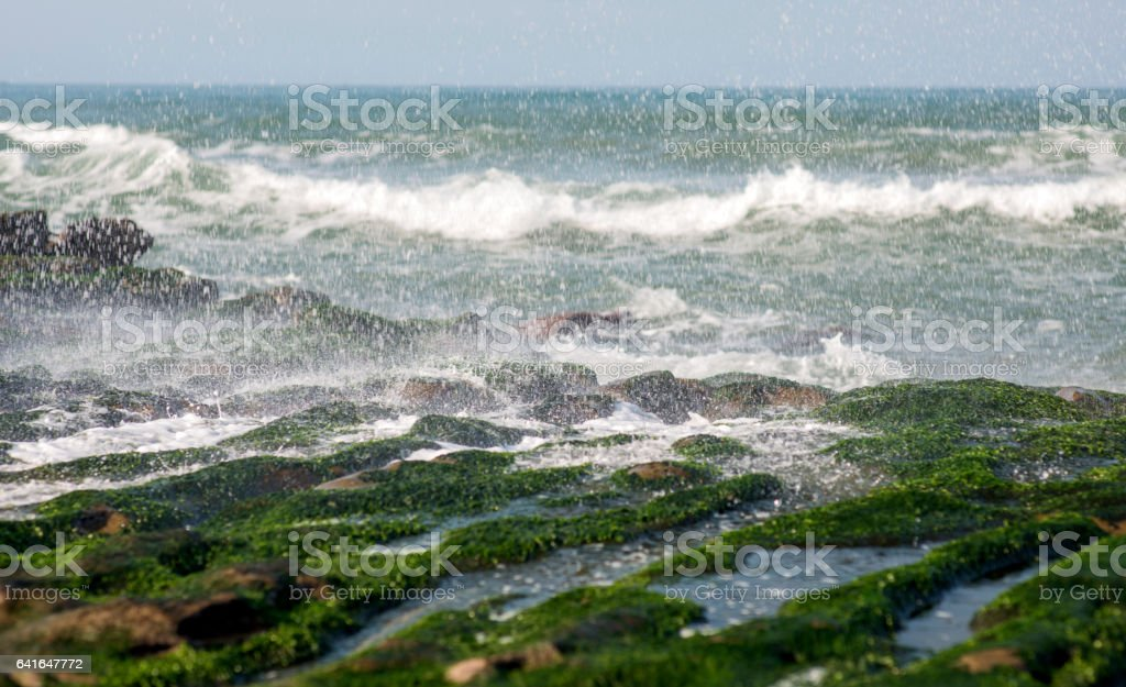 View of tropical rocky beach landscape with green seaweed stock photo