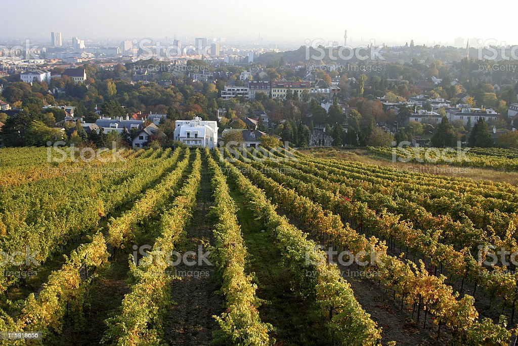 view of vienna with vineyards royalty-free stock photo