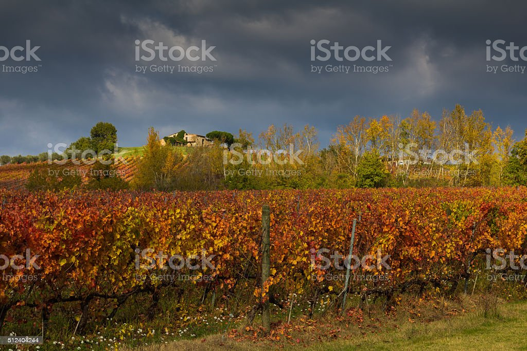 View of vineyards in autumnal colors stock photo
